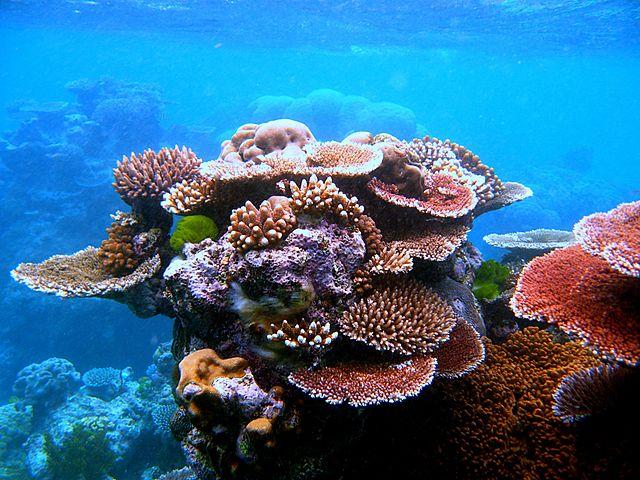 coral-medioambiente